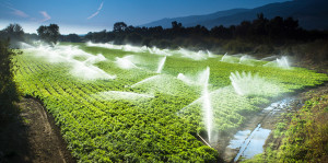 Central Valley farm irrigation.